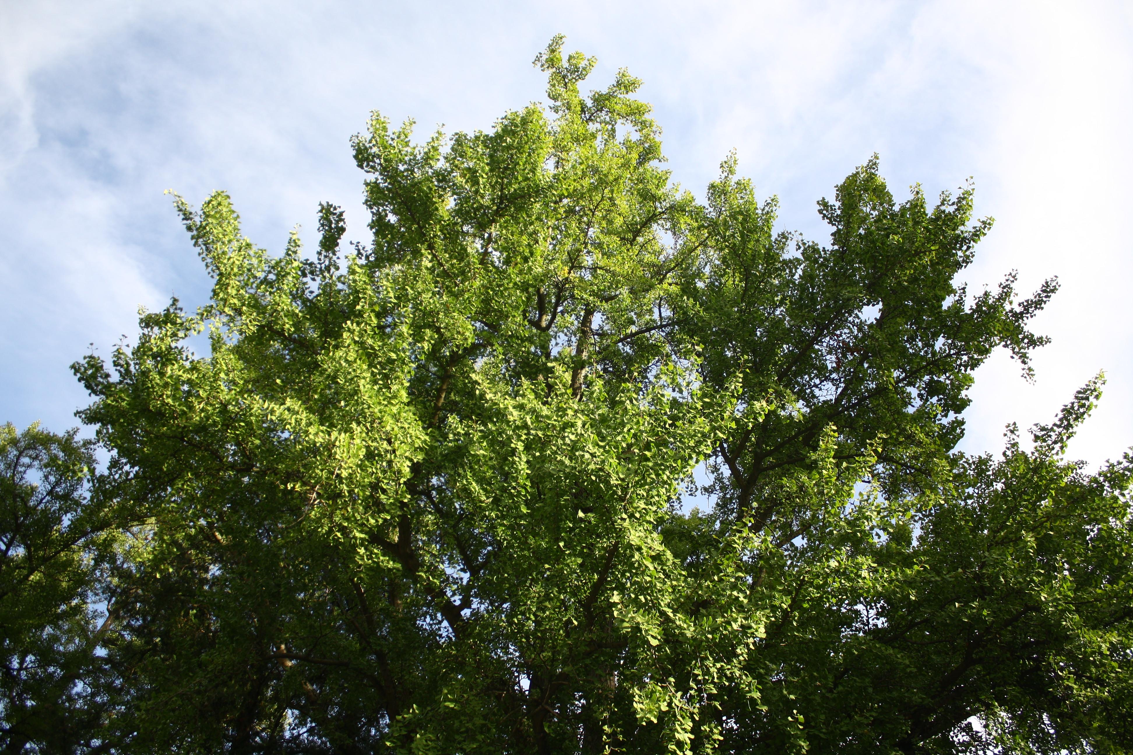 en ville - un arbre peut en cacher un autre